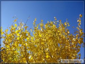 Жёлтые осины