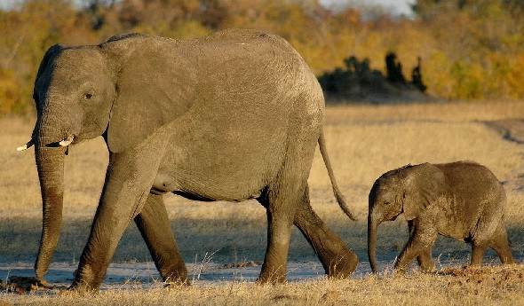 Удивительный животный мир Африки